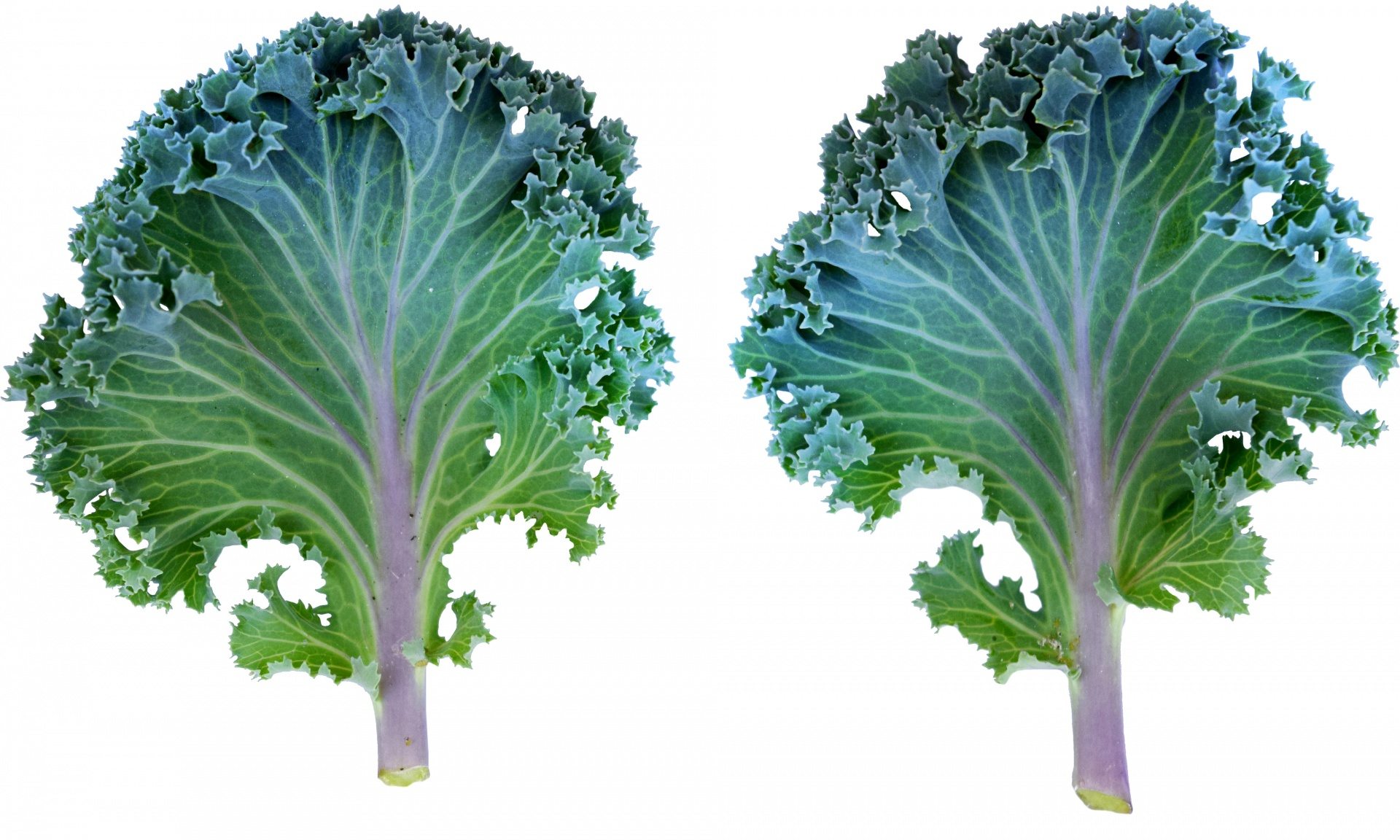 Ingredient of the Week: Kale